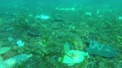 Les fonds marins de Cannes dépollués grâce à une impressionnante vidéo vue 2 millions de