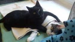 Ce chat soigne des animaux malades et fait craquer les