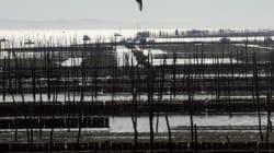 À cause d'une micro-algue toxique, des coquillages du bassin d'Arcachon interdits à la