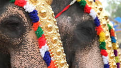 Season for Elephant Torture Is Underway in Kerala,