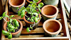 20 Things All Gardeners Would Love To