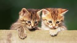 13 motivi per cui possedere un gatto è una cosa