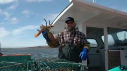Le homard gaspésien se rapproche de la
