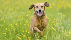 Top Tips For Feeding Your Dog the Healthiest