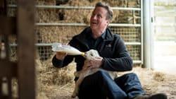 Croissance au top, chômage au plus bas... Pourquoi David Cameron n'est pas sûr de gagner (même avec cet