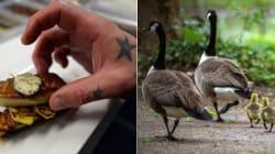 Vereadores de São Paulo proíbem foie gras nos restaurantes da