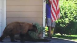 Un homme et un ours se croisent... et se font