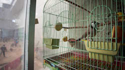 Birds Have Fundamental Rights, Can't Be Kept in Cages, Says