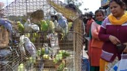 En Inde, les oiseaux ont des