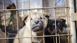 Dog Meat, Plants in Pain and Mud