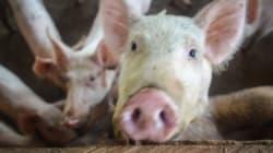 Spécisme et carnisme: les préjugés envers les animaux non