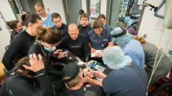 Dolphin Undergoes Breakthrough Surgery In