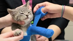 This Tiny Kitten In Casts Could Use Your