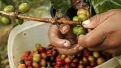 Aide aux pays en développement: nous devons redevenir chef de