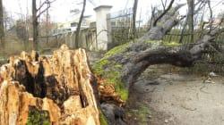 パリ気候会議でCO2の本格削減を 異常気象で倒れた樹木の声なき叫びを聞け