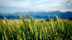 Goodbye, Canadian Wheat Board, Hello G3