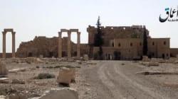 C'è da piangere Palmira, non le mancate palme d'oro a