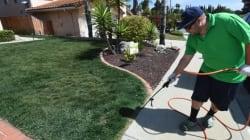 Peindre sa pelouse, c'est la dernière tendance