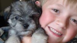 Family Devastated After Dog Eats Poisoned Chicken,