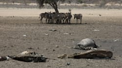 Drought Threatens 10 Million Africans: Aid