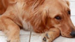 Mauvais traitement des animaux: la loi sera plus sévère