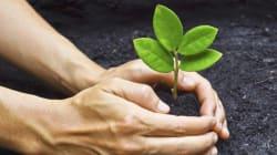 Plante uma árvore e colha