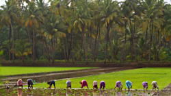 Indian Govt Announces Subsidy On Diesel, Power & Seeds To Farmers In Case Of Deficient