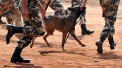 Retired Bomb Squad Canines Who Saved Countless Lives In 26/11 Attacks Now Have A Loving