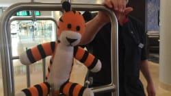 Les employés d'un aéroport offrent d'adorables vacances à un toutou perdu