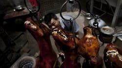 Une Chinoise sauve 100 chiens de la