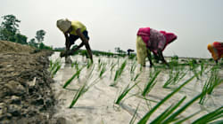 Adequate Rainfall Has Helped Farmers Pick Up Their Sowing