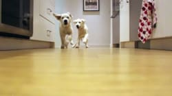 You Could Watch These Adorable Puppies Running For Their Chow A 1000 Times! And You