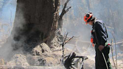 B.C. Fire Crews Save 1,000-Year-Old