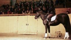 Il legame senza limiti tra cavalli e disabilità. Un mondo in cui contano le emozioni, non le