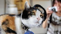 Mort du chat Tama, chef de gare et aimant à touristes