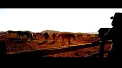 EXCLUSIVITÉ - «New King», nouveau vidéoclip de Sunrise and Good