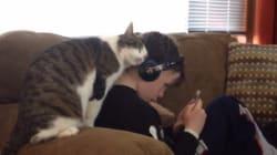 この猫は、少年のことを愛している。本当に(動画)