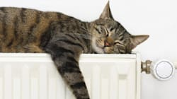 7 bonnes raisons de faire une sieste