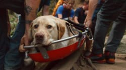 Fraser The Dog Had A Really Rough Day. Rescuers Gave Him A