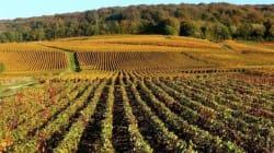Les côteaux de Champagne inscrits au Patrimoine mondial de