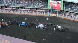 Calgary Stampede Horse Euthanized After Chuckwagon