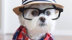 Voici les chiens les plus «hipsters» du web