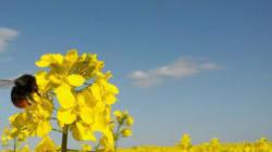 ネオニコチノイド系農薬の危険性をめぐる議論は次の段階に