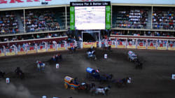 Chuckwagon Drivers Fined Over Horse