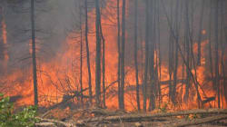 Is There a Case to be Made for Letting Canada's Wildfires