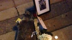 Toronto a réservé toute une vigile à ce raton laveur mort