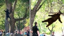 L'orso vola. Ancora
