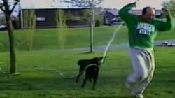 Ce chien semble prendre un malin plaisir à arroser son