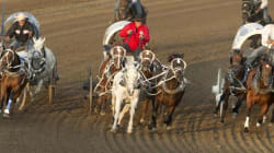 Review Coming After 4th Horse Dies At Calgary