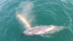 Cette baleine souffle un
